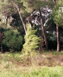 Pescara, Pineta 2007