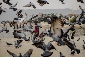 Pushkar moments