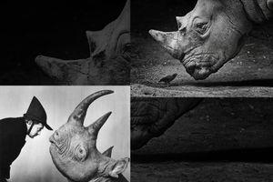 About rhino