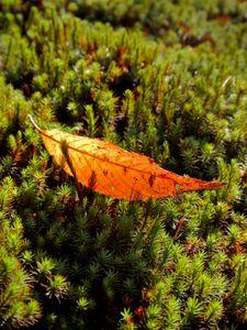 Moss and Leaf