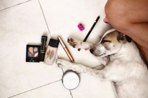 Deborah's dog with the make-up she is using for transformation. © Meeri Koutaniemi