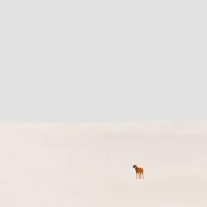 Dune 8