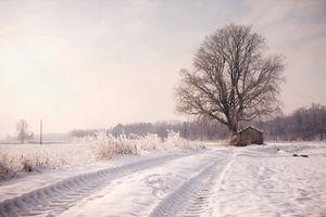 Memories of trees .9