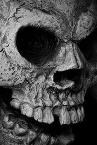 Skull, Charleston, South Carolina