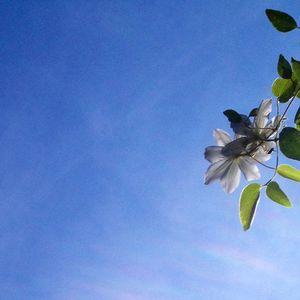 wild flower 1