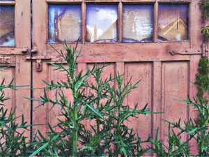 weeds & ivy