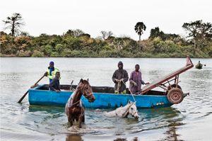 Horses to market