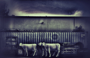 Cows of the Apocalypse