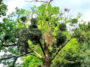Trees 21