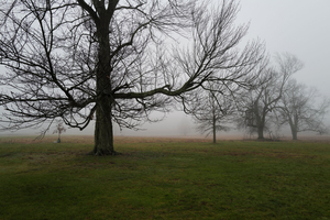 Trees in Fog, New Canaan, CT, 12 12 20, Color
