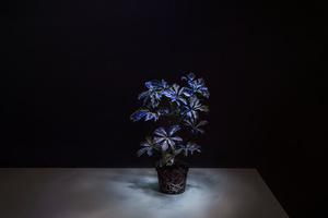 Shaded Lamp, Future Light 2015