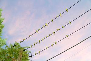 "From the photo series ""Tokyo Parrots"" © Yoshinori Mizutani"
