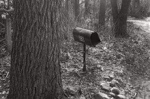 Mailbox with trees