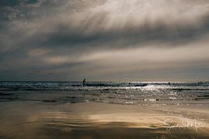 Ocean life25