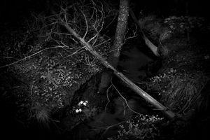 Deep dark forest 2