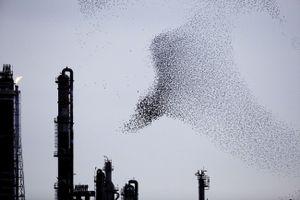 "From the series ""Refinery Flocks"" © Massimo Cristaldi"