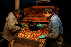 Sorting the good apples from the rotten ones