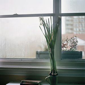 Bulbs © Yael Ben-Zion