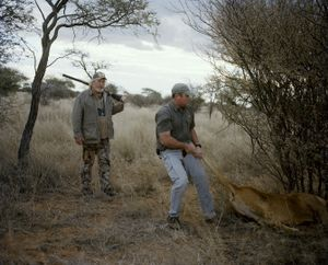 untitled hunter, trophy lioness, kalahari, northern cape, south africa-from the series 'hunters'-David Chancellor