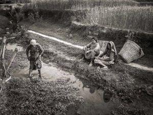 Farm workers  near Chapagaon, Nepal