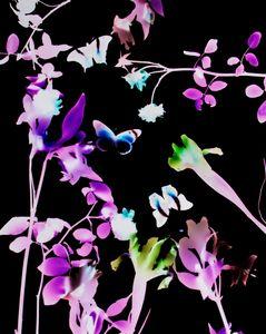 Photofauna Floragram #5