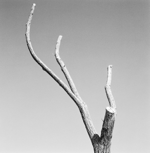 Dead Forest 2