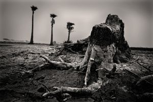 Increased salinity in the water turned fertile lands to barren ground. A ruin of an old tree trunk is left as evidence of past glory. Ashasuni, Satkhira. © Munem Wasif/VU'