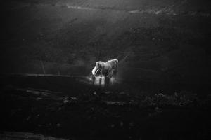 White horse on the mountain