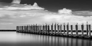 Texas City Dike - Pelicans On Pilings