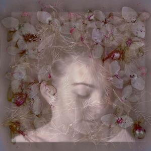 Blodewedd of the Nine Blossoms