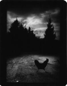 """Untitled"" (Black Cockrel), 2005 © Giacomo Brunelli"