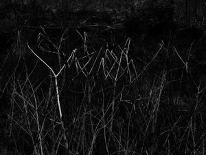 constellations-invasives-06.jpg