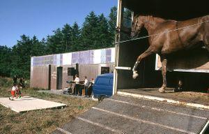 dancing horse, ballinasloe.