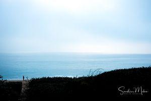 Ocean life18