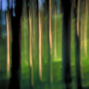 Cypress 3 (vibrations) © Alfred Tom