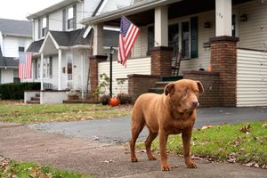 Joey, 9.5 years old, Hawthorne, New Jersey
