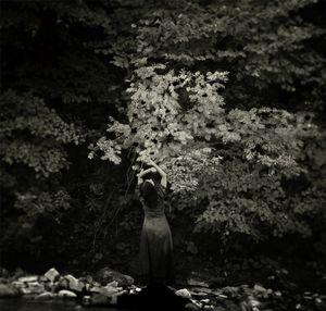 Soul of a tree