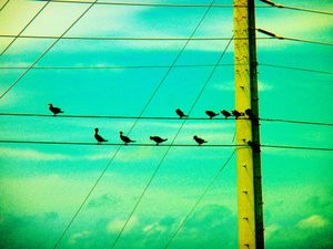 Birds  and Wires