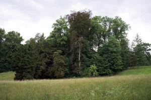 'A Field of Trees' - Bergpark Wilhelmshöhe, Kassel, Germany © Mireille Schellhorn 2012