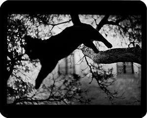 """""""Untitled"""" (Cat Jumping), 2006 © Giacomo Brunelli"""