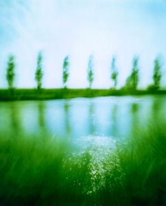 fiume alberi
