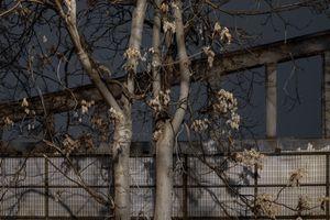 Dark Tree 11