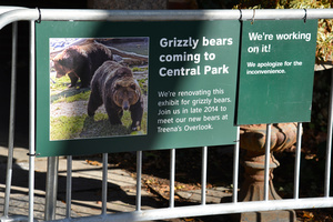 Grizzly Bears - Coming to NYC