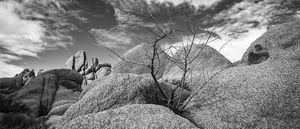 tree in the rocks