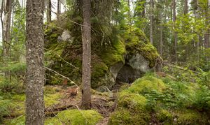 untitled #3 from boreal forest
