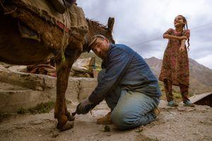 Funny donkeyshoes