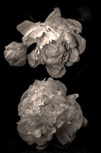 Portrait in Bloom © Rebecca Moseman