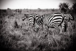 Nairobi Stripes