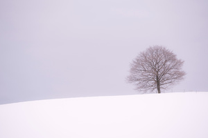 Winter Horizon in the Vicinity -07