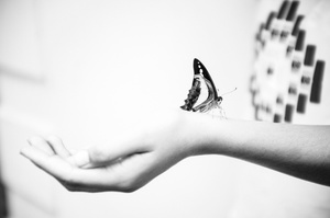 Amalia and Butterfly